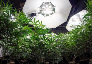 Como escolher a iluminação do grow