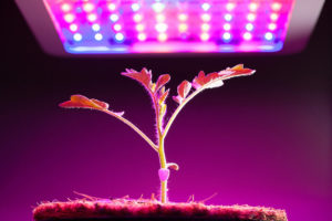 eficiência luminosa no grow